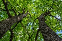 La bellezza della foresta incanta di estate fotografia stock libera da diritti