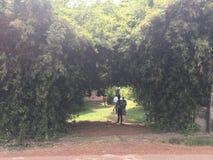 La bellezza della madre natura lo gode attraverso gli alberi di bambù Immagine Stock