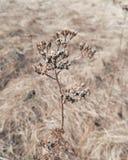 La bellezza della molla in anticipo in Lituania fotografia stock libera da diritti