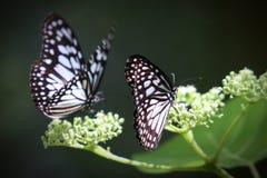 La bellezza della natura Immagine Stock Libera da Diritti