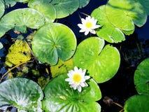 La bellezza della natura Immagini Stock