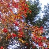 La bellezza della natura il giorno di autunno Fotografie Stock Libere da Diritti