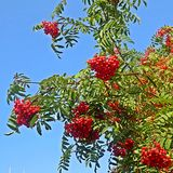 La bellezza della natura il giorno di autunno Immagine Stock Libera da Diritti