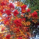 La bellezza della natura il giorno di autunno Immagini Stock