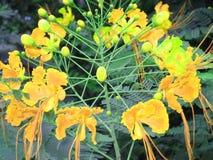 La bellezza della natura messicana - gialla fotografie stock