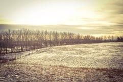 La bellezza di Alberta immagine stock libera da diritti