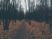 La bellezza di autunno sta colpendo Fotografia Stock Libera da Diritti