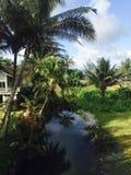 La bellezza di Kauai Immagini Stock