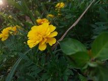 La bellezza gialla della natura fotografia stock libera da diritti