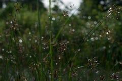 La bellezza nella natura Fotografie Stock