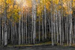 La bellezza paesaggistica del Colorado Rocky Mountains Immagine Stock