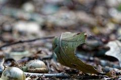La bellota en el follaje del otoño, caída sale del fondo fotografía de archivo libre de regalías