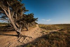 La Bergere沙丘在La Barre de Monts,买主 免版税库存图片