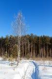 La betulla coperta di foresta del giorno di inverno del percorso e di brina orla Fotografie Stock