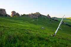 La betulla d'argento sul prato dell'alta montagna Immagine Stock
