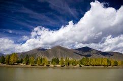 La betulla di fiume Fotografia Stock
