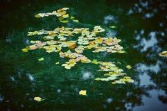 La betulla lascia la menzogne sulla superficie dell'acqua Fotografie Stock