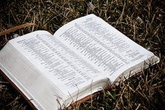 La biblia en la hierba Imagenes de archivo