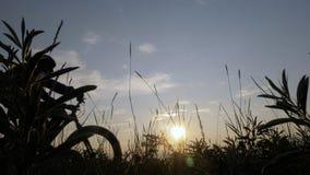 La bici grassa inoltre ha chiamato la bici della grasso-gomma o del fatbike nella guida dell'estate nell'erba archivi video