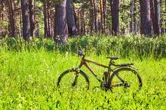 La bici nell'erba nella foresta Siberia, Russia Fotografia Stock