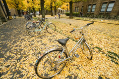 La bicicleta con el ginkgo amarillo que cae se va en la tierra en el otoño llevado en la universidad de Tokio Fotos de archivo