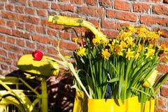La bicicletta gialla del primo piano con il canestro del narciso fiorisce sul fondo rustico del muro di mattoni Fotografie Stock Libere da Diritti