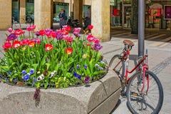 La bicicletta ha parcheggiato vicino all'aiola della via ed ai fiori di fioritura in Mun Fotografia Stock Libera da Diritti