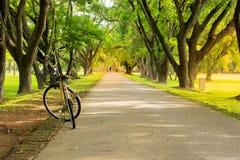 La bicyclette de femme garée sur l'arbre a rayé la route de campagne photos libres de droits