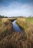 La Bielorussia: natura di autunno del bordo paludoso Fotografia Stock