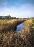La Bielorussia: natura di autunno del bordo paludoso Immagine Stock Libera da Diritti