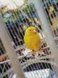 La birdie intéressante photo libre de droits