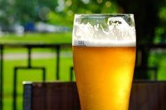 La birra in un vetro vetro/vetro, bolle aumenta Sui precedenti del vetro verde del fogliame con le gocce dorate fotografie stock