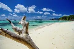 La Blague, Seychelles d'Anse Photo libre de droits