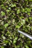 La boîte d'arrosage en aluminium de jardin avec des gouttes de pluie a arrosé la plante verte photo stock