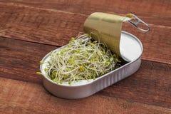 Les pousses de brocoli peuvent dedans Photo libre de droits