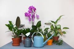 La boîte et le pulvérisateur d'arrosage sont sur la table à côté des fleurs mises en pot dans le pot Image stock