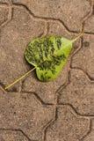 La BO copre di foglie Immagine Stock