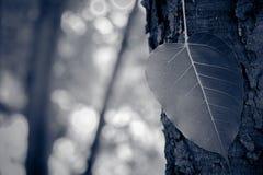 La BO poussent des feuilles Image stock