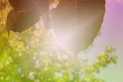 La BO poussent des feuilles sur le backgroung dans le style de vintage Image stock