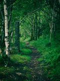 La bobina del camino pone verde sin embargo el abedul del verano y el arbolado de la haya Imagen de archivo libre de regalías