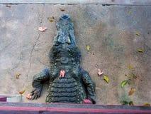 La bocca aperta di sonno del coccodrillo l'alimento è pollo nello zoo fotografia stock