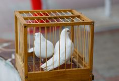 La boda de dos blancos se zambulló en una jaula imagen de archivo libre de regalías