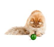 La bola verde roja del Año Nuevo de los juegos del gatito que se sienta Fotografía de archivo libre de regalías