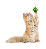 La bola verde roja del Año Nuevo de los juegos del gatito que se sienta Imagenes de archivo