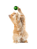 La bola verde roja del Año Nuevo de los juegos del gatito que se sienta Imágenes de archivo libres de regalías