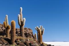 La Bolivia Fotografia Stock Libera da Diritti