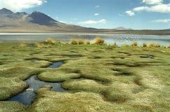 La Bolivia del sud Fotografia Stock Libera da Diritti