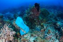 La bolsa de plástico contamina un arrecife de coral Foto de archivo libre de regalías