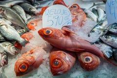 La Boqueria market in Barcelona. Slimehead fishes at Mercat de Sant Josep de la Boqueria market in Barcelona, Spain Royalty Free Stock Images