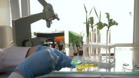 La botánica, profesional del laboratorio con la jeringuilla inyecta la droga en la vegetación genético modificada en experimental almacen de video